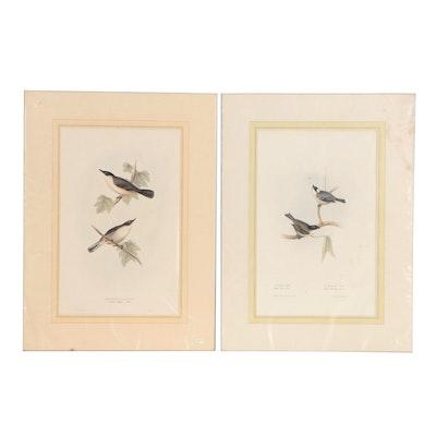 John Gould Ornithological Hand-colored Lithographs