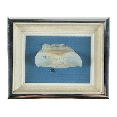 Souvenir Boca Grande Florida Seashell, Late 20th Century
