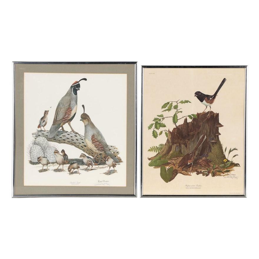 Ray Harm Ornithological Offset Lithographs