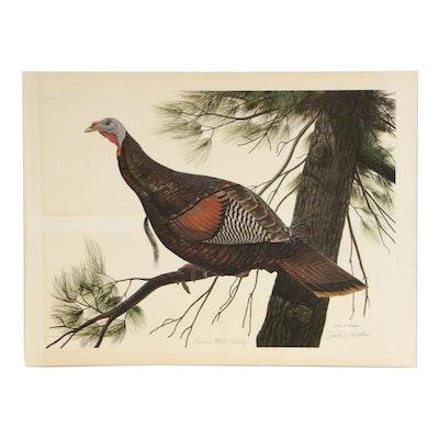 """John A. Ruthven Offset Lithograph """"Eastern Wild Turkey,"""" 1967"""