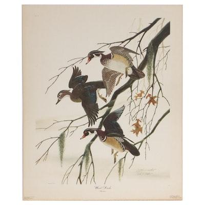 """John A. Ruthven Offset Lithograph """"Wood Ducks,"""" 1970"""