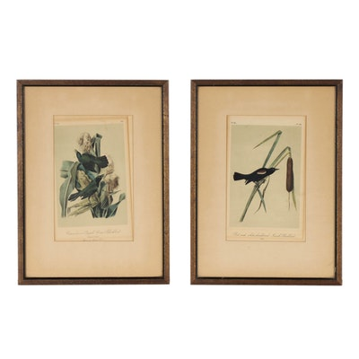 John James Audubon Ornithological Hand-colored Lithographs, 19th Century