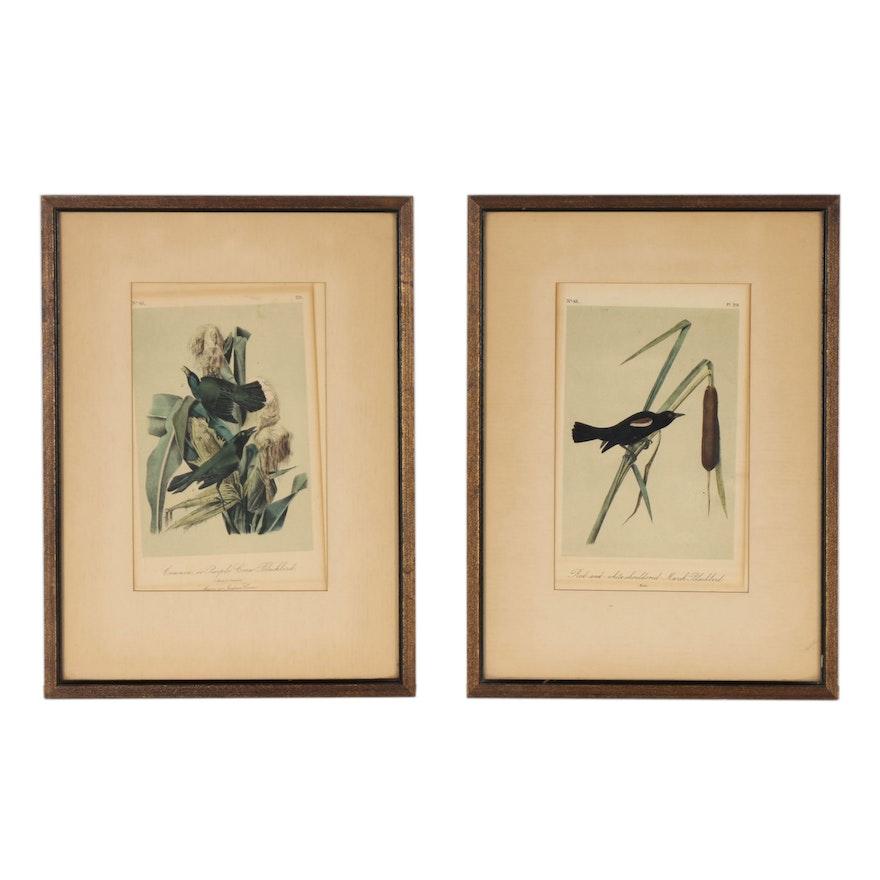 John James Audubon Ornithological Hand-colored Lithographs, 19th Century
