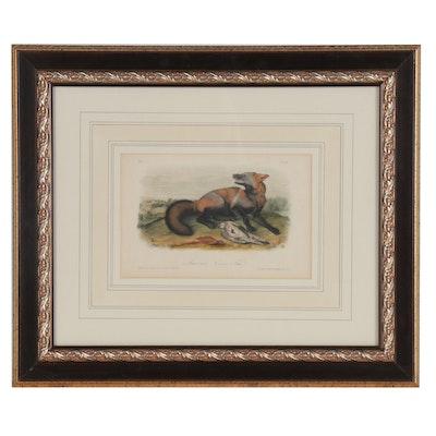 "John J. Audubon Hand-colored Lithograph ""American Cross Fox"""