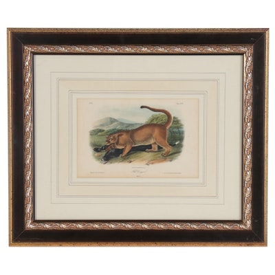 "John J. Audubon Hand-colored Lithograph ""The Cougar"""