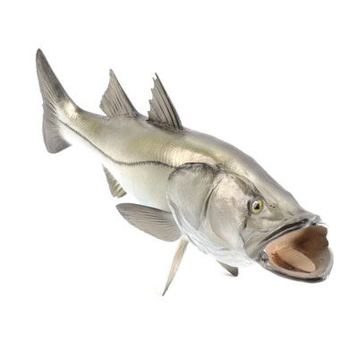 Snook Fish Taxidermy Mount