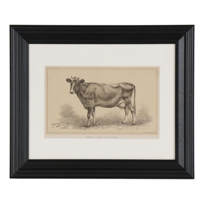 Lithographic Cow Plate from U.S. Consular Reports. Cattle and Dairy, 1888