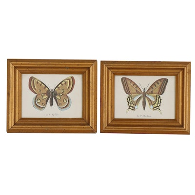 Offset Lithographs after Butterfly Specimen Illustrations