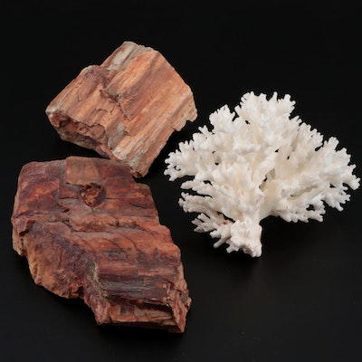 Petrified Wood and Coral Specimens