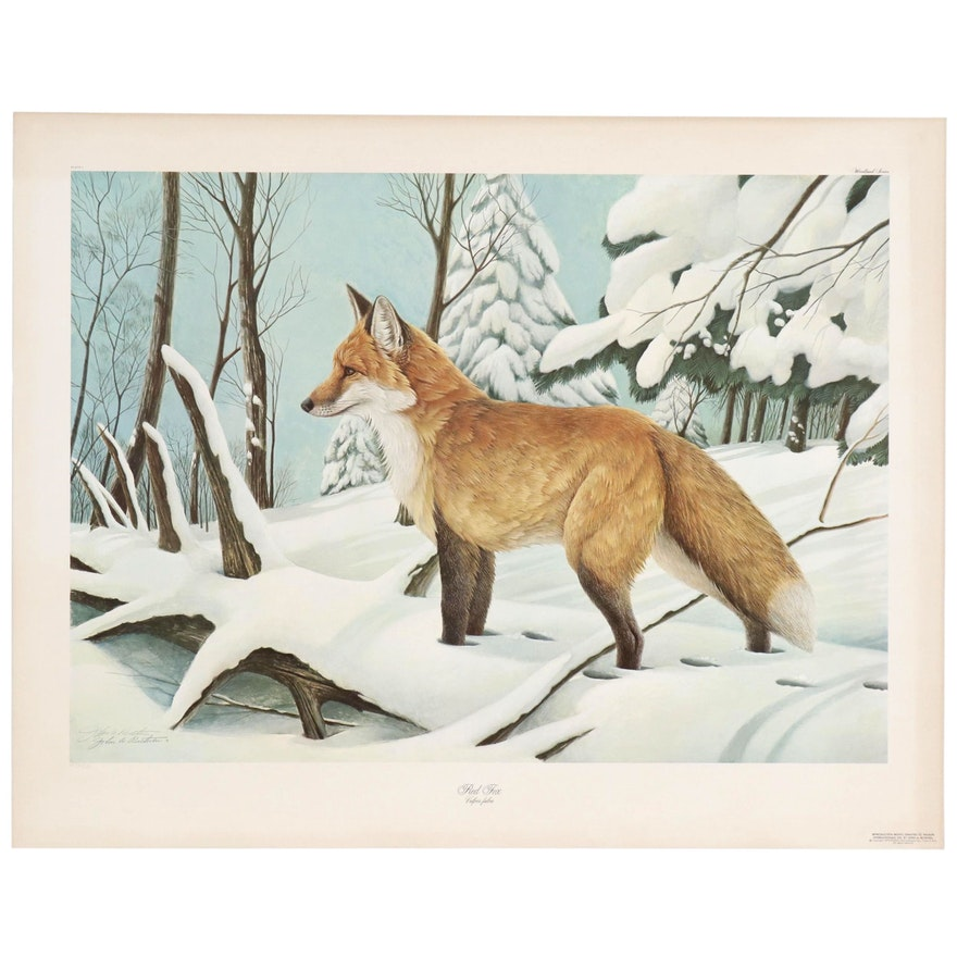 """John Ruthven Offset Lithograph """"Red Fox"""""""
