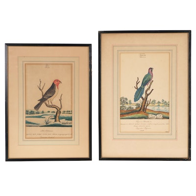 Ink and Watercolor Avian Illustrations, Early 19th Century