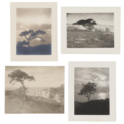 Leopold Hugo Silver Gelatin Prints of Cypress Trees, Early 20th Century