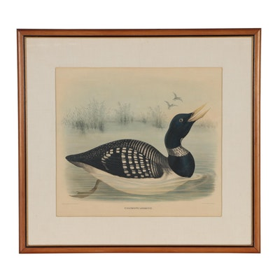 "Wildlife Hand-colored Lithograph of Loon after Daniel Elliot ""Colymbus Adamsii"""