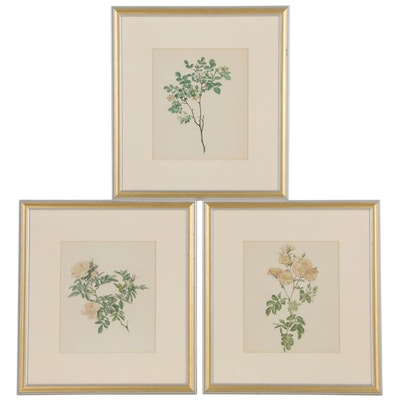 Hand-Colored Lithographs of Roses