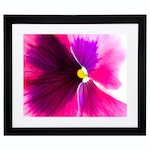 """Arra Bella Rose Abstract Giclée Photograph """"Pink, Purple, and White Pansy"""""""