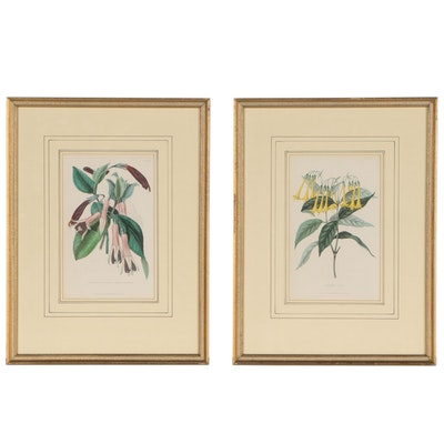 "Alfred Adlard Hand-colored Botanical Aquatints for ""Florist's Journal"", 1845"