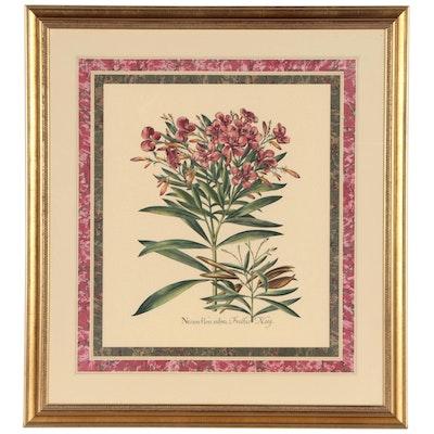 Lithograph After Basilius Besler Botanical Engraving