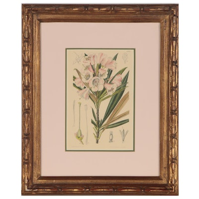 Lilian Snelling Hand-colored Botanical Lithograph