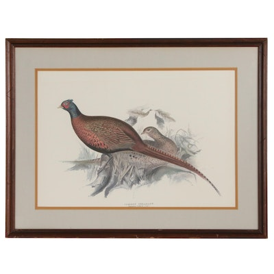 "Offset Lithograph After John Gould ""Common Pheasant"""