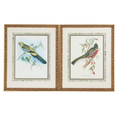 Offset Lithographs After John & Elizabeth Gould Ornithological Illustrations
