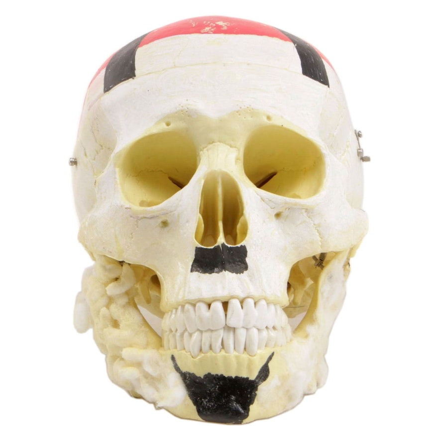 Hand-Painted and Embellished Model Human Skull