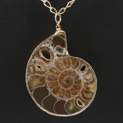 Ammonite Pendant on a Sterling Curb Chain