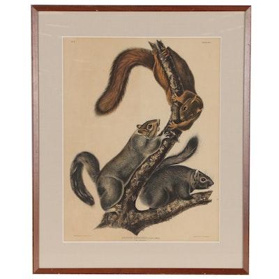 "J.T. Bowen Lithograph After John James Audubon ""Cat Squirrel"""