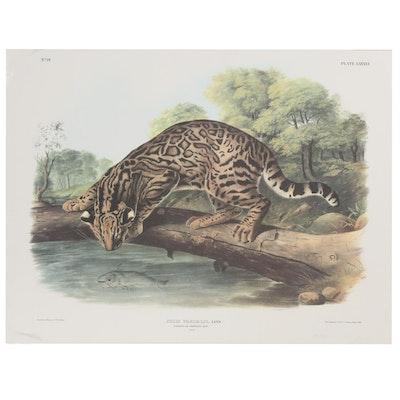 """Offset Lithograph After John James Audubon """"Felis Pardalis"""""""