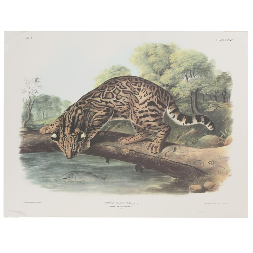 "Offset Lithograph After John James Audubon ""Felis Pardalis"""
