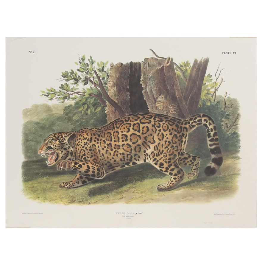 "Offset Lithograph After John James Audubon ""Felis Onca"""
