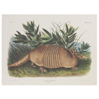"Offset Lithograph After John James Audubon ""Dasypus Peba"""