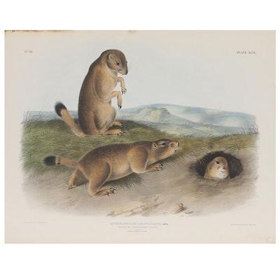 "J.T. Bowen Lithograph After John James Audubon ""Prairie Dog"""