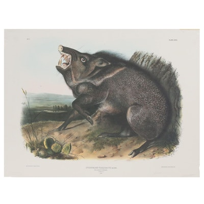 "Offset Lithograph After John James Audubon ""Dycoteles Torquatus"""