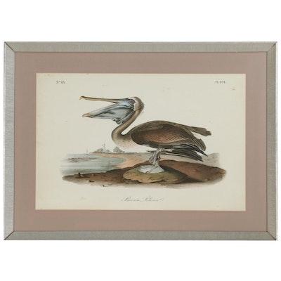 "Giclée After John James Audubon ""Brown Pelican"""