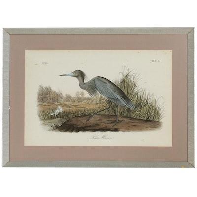 """Giclée After John James Audubon """"Blue Heron"""""""