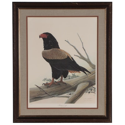 "John A. Ruthven Offset Lithograph ""Bateleur Eagle"", Late 20th Century"
