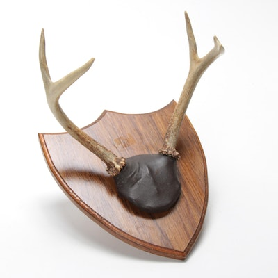 White Tailed Deer Antlers on Shield Mount