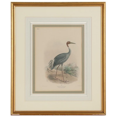 "Lithograph Designed by J.G. Keulemans for ""A History of the Birds of Europe"""