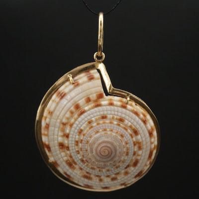 18K Bezel Set Nautilus Shell Pendant
