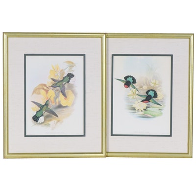 Offset Lithographs of Hummingbirds After John Gould