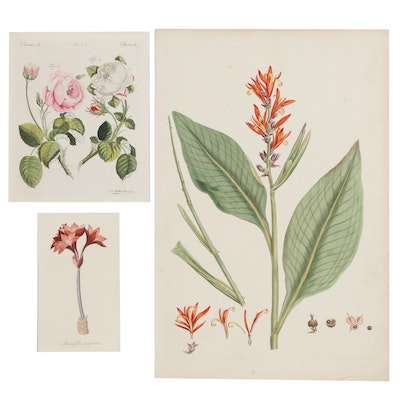 Hand-Colored Botanical Etchings after Jacob Xaver Schmuzer, 19th Century