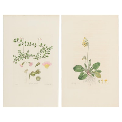 Hand-Colored Botanical Engravings after Joseph Swan, 19th Century
