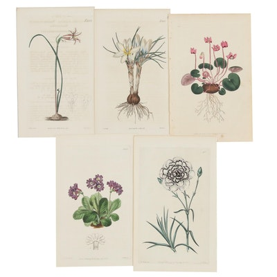 Hand-Colored Botanical Engravings, Early-Mid 19th Century