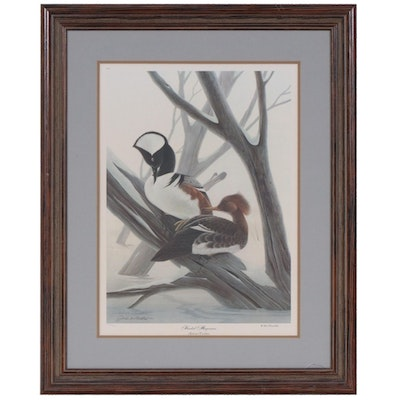 "John A. Ruthven Offset Lithograph ""Hooded Mergansers"", Late 20th Century"