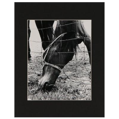 "Ott Gangl Inkjet Print ""The Grass is Always Greener"", 2011"