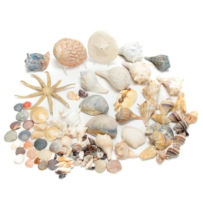 Starfish, Coral, Seashells, and Other Marine Specimens
