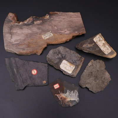 Petrified Wood and Bark Specimens with Fossilized Shrimp and Fern Specimens