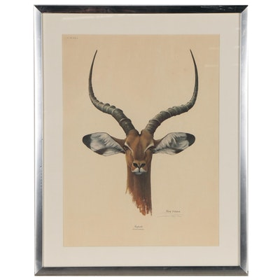 "Ray Harm Offset Lithograph ""Impala"""