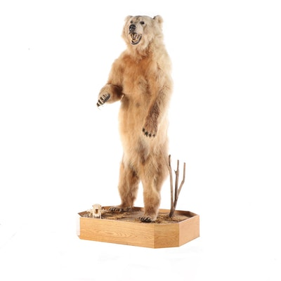 Standing Full Body Alaskan Kodiak Bear Mount with Skull