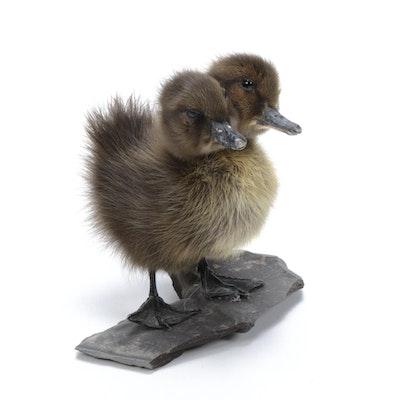 Two-Headed Gaff Taxidermy Duckling